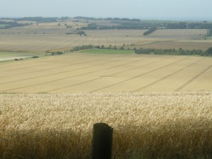 de graancirkel op afstand