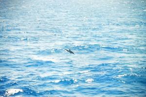 Dolfijntje langszij het schip. gezien vanuit grote patrijsboord