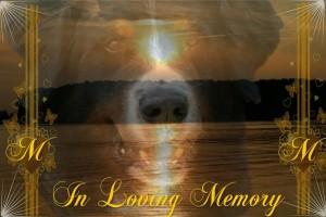 in memoriam Max
